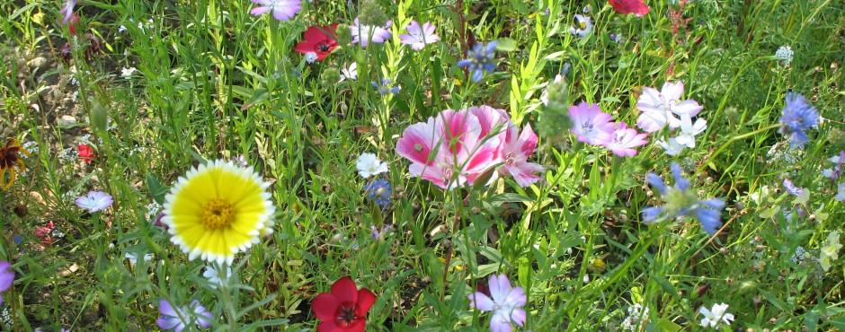 Blumen 2 Alt Text